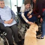 terapia asistida con perros animales residencia plata y castañar albertia mayores