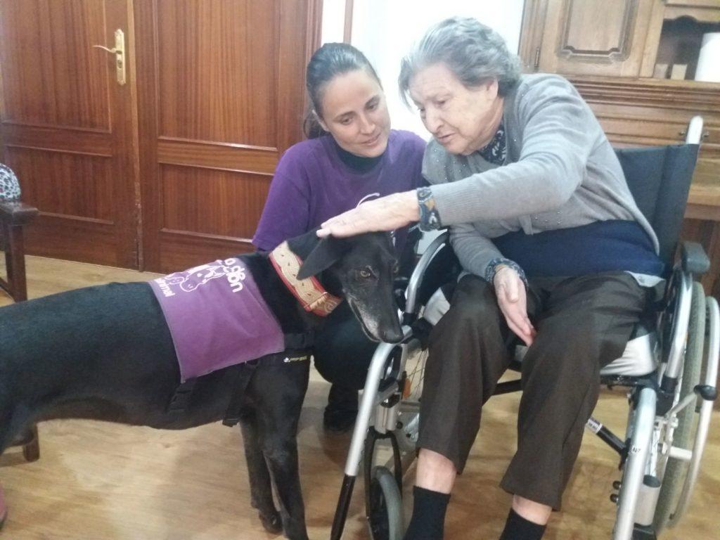 terapia asistida con animales taa residencia de mayores albertia las palmeras