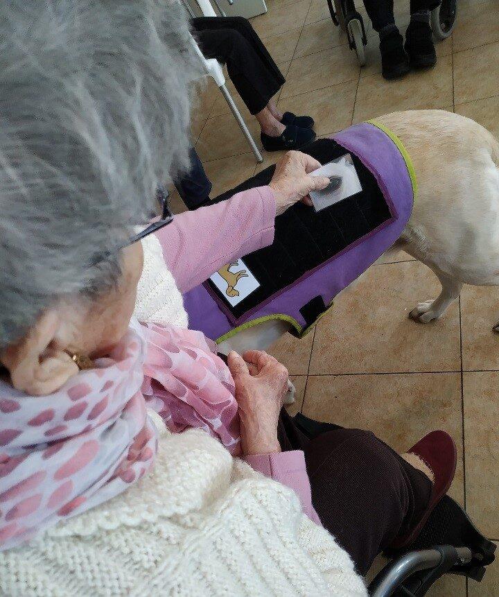 terapia intervencion asistida con animales residencia ancianos puertollano albertia